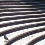 Due på Den Spanske Trappe i Rom - Sort-hvid billede